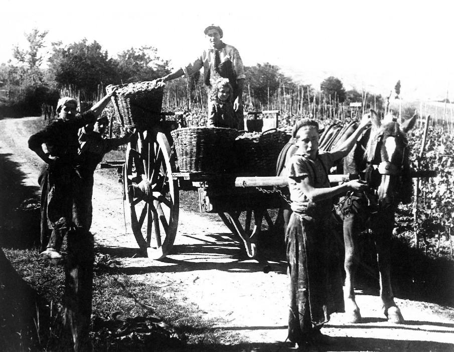 famiglia mezzadrile impegnata nella raccolta del'uva