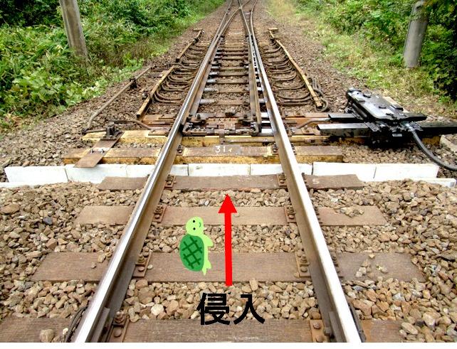 la tartaruga prosegue lungo la linea ferroviaria