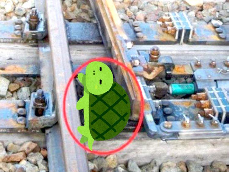 tartaruga intrappolata nel deviatoio